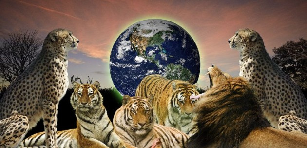 Creative concept image of wild cats protecting the planet Earth