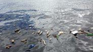 Az óceánok védelmében a műanyagok használatának visszaszorítására szólított fel David Attenborough