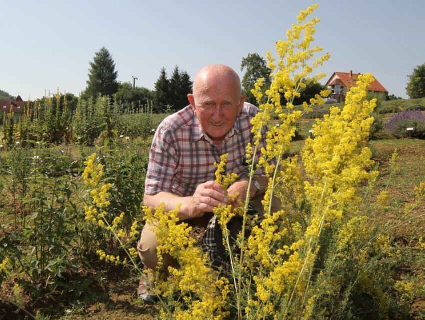 Szabó Gyuri bácsi gyógynövényekkel