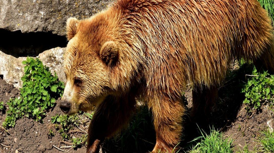 A medvét el kell kerülni figyelmeztet a szakértő