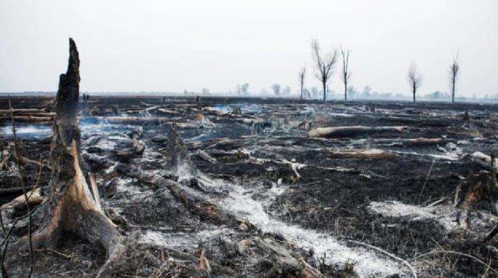Több év múlva éledhet újjá a természet a fonyódi nádasnál a pusztító tűz után