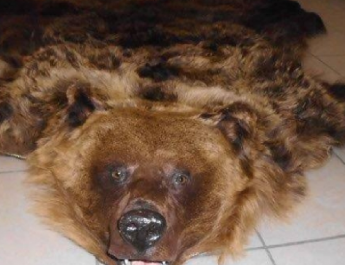 Medveprémet találtak Záhonynál egy ukrán kocsiban