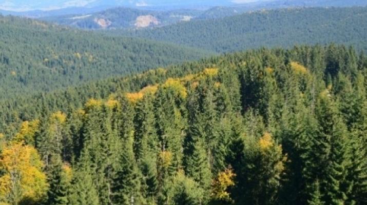A kínai Alibabán szabadulnának meg Románia erdőállományának jelentős részétől