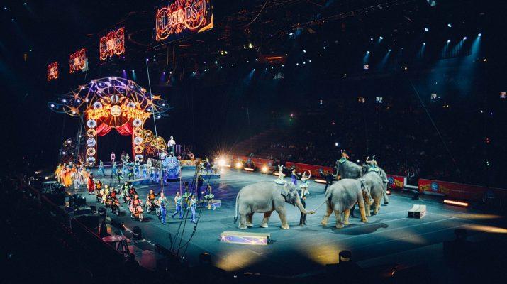 Szeptembertől Szlovákiában is betiltják a vadállatok cirkuszban való szerepeltetését