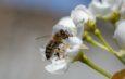 Nem tesz jót a méheknek az időjárás