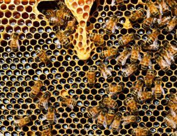 Méhek a kaptárban